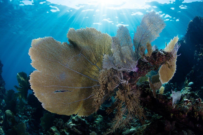 undersea in belize