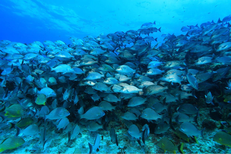 Belize Reef Fishing