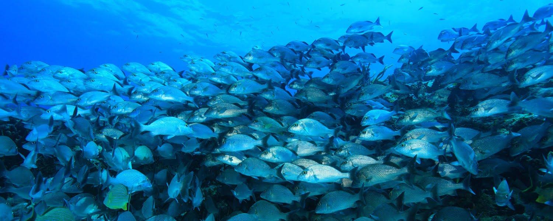 Reef Fishing in Belize